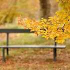 Autumn bench by Denise Couturier