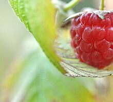 The last raspberry by Denise Couturier