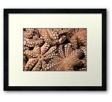 Fresh Octopuses  Framed Print