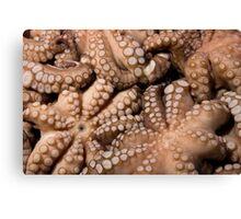 Fresh Octopuses  Canvas Print