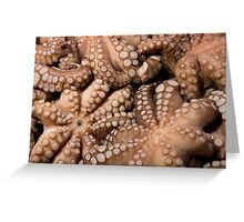 Fresh Octopuses  Greeting Card