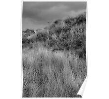 Solway sand dunes Poster