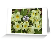Happy Easter to everyone! Greeting Card