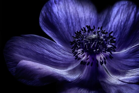 Blue by Mandy Disher