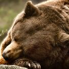 Lazy Bear  by Karen Peron