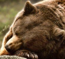 Lazy Bear  by Karen Peron
