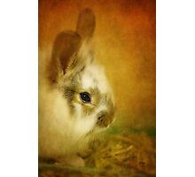 Memories of Watership Down Photographic Print