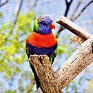 Pretty Bird by Kristen O'Brian