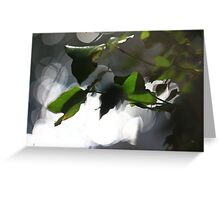 Ivy - Silverlight Greeting Card