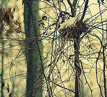 Winter Bird Nest by Arteffecting