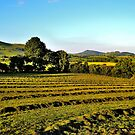 Mid Wales Summer by melek0197