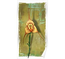 Monkey Face Orchid Poster