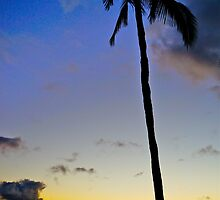 Palm Sunset by Tracey McQuain
