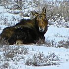 Moose in the Snow by Tisha Clinkenbeard