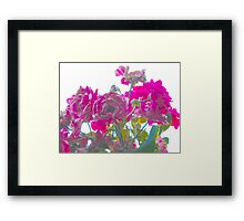 Pink evolution Framed Print