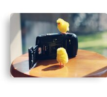 Toy Chickens - Camera Canvas Print