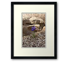 SOLO AND STRONG Framed Print