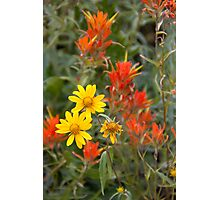 Yellow wildflowers surrounded by Indian Paintbrush Photographic Print