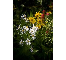 White, Yellow and Red wildflowers growing together Photographic Print