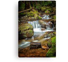 Below Strickland Falls, South Hobart, Tasmania #7 Canvas Print
