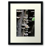 Hiding in there Framed Print