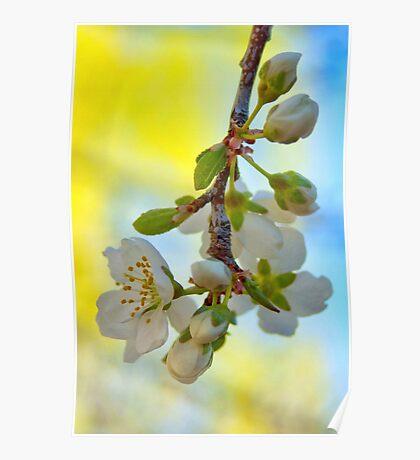 Spring Plum Blossoms Poster