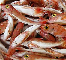 Red Fish with Yellow Eyes by kirilart