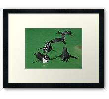 Playtime for the Penguins Framed Print