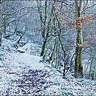 Winter Woods by Derek55