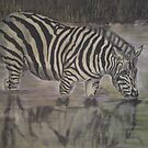 Zebra by Stan  Brookfield