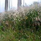 Mountain grass in the fog by Marcidog