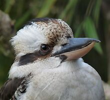 Kookaburra by Marilyn Grimble