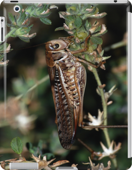 Locust Camourflaged With Garden Background by taiche