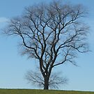 Tree taken early spring in Yorkshire by himmstudios