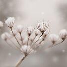 Snow seeds by Rachael Talibart
