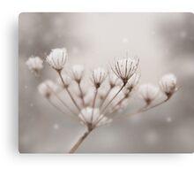 Snow seeds Canvas Print