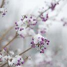 Snow Berries by Rachael Talibart