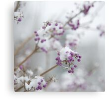 Snow Berries Canvas Print