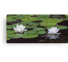 Water lily (Nymphaea alba) Canvas Print