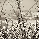 Winter landscape by Marcidog