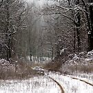 Winter forest with railroad track by Marcidog