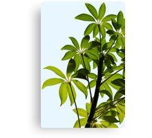 Backlit House Plant 3 Canvas Print