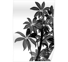 Backlit House Plant Black and White Poster