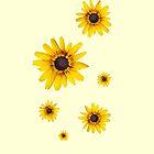 Yellow flowers by Balint Takacs