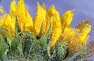 Bubbly Sunflower by Nicole  Markmann Nelson