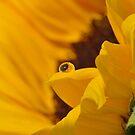 Flower Reflection by Nicole  Markmann Nelson