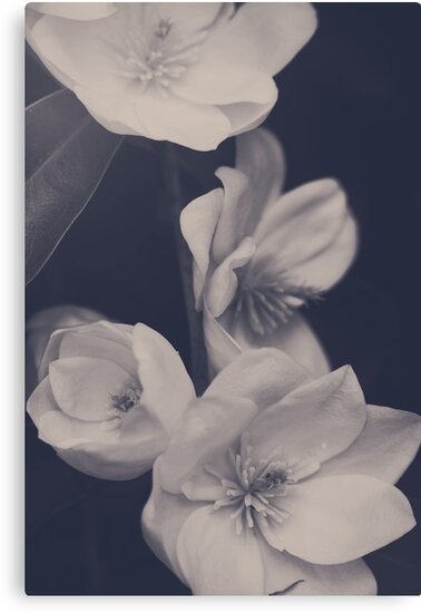 I Was Always Your Flower by Laurie Search
