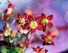 Unique little flowers by Nicole  Markmann Nelson