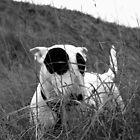 bw dog by Ryanpk