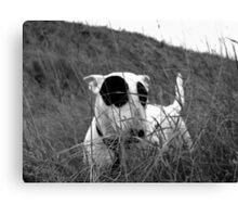 bw dog Canvas Print